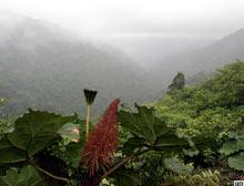 Tropikal ormandaki 'kesim' azalmalı.12135