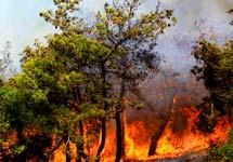 Yangınlarda son durum.10646