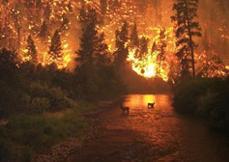 Selçuk'ta zeytinlik yangını.8058