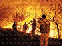 İstanbul'da orman yangınlarına karşı uyarı.14376