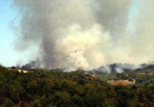 Kahramanmaraş'ta çıkan yangın korkuttu.7394