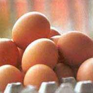 Rafadan yumurtada virüs tehlikesi.6530