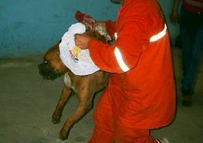 Çin'de bir köylü sinirlediği bir köpeği ısırarak öldürdü.9300