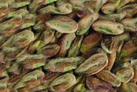 Antep fıstığı ihracatı yüzde 70 arttı.13778