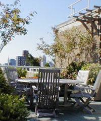 Belediyeden çatılara bahçe.17921