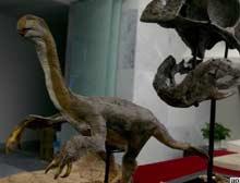 Çin'de tavuğa benzer dev dinozor fosili.9015