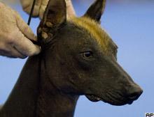 Kedi-köpek derisi ticaretine yasak.11283