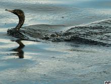 Şili'de bir göl ortadan kayboldu.42108