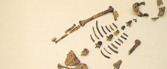 Dünyanın en meşhur fosili turneye çıkıyor.19516