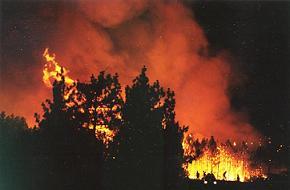 Gediz'deki orman yang�n� kontrol alt�nda.18250