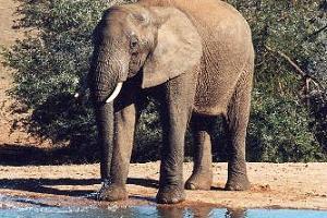 Evcil filler dehşet saçtı: 8 kişi öldü.22551