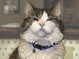 Bu kedi insanların öleceği günleri biliyor.14169