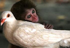 Maymunlar kafadan hesap da yapabiliyormuş.8686