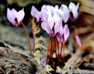 Güz çiçeklerinin son yılı olablir .21462