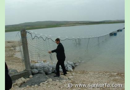 Bafa Gölü'ne 1 milyon balık.17893