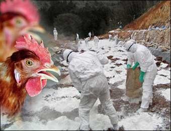 Özbekistan'da kuş gribi alarmı.63969