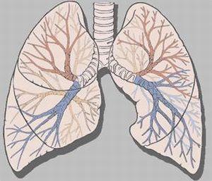 Akciğerlerimiz alarm veriyor!.20398