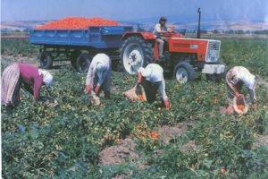 Yağışlar çiftçiyi sevindiriyor.18467