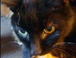 Bu kedi tam 120 yaşında!.13654