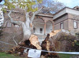 Kayseri'de lodosun yıktığı çınar, 1 ay kaldırılamadı.12747