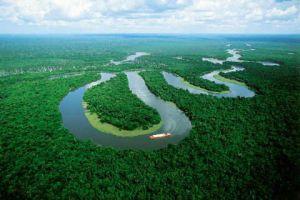 Amazon ormanlarının yüzde 60'ı, 2030 yılında yok!.13772