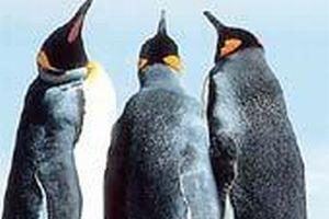 Sahillere penguen �l�leri vurdu.12346
