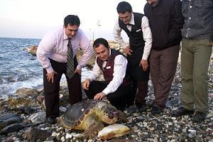 Dev bir deniz kaplumbağası kıyıya vurdu.56401