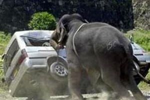 K�ye dalan fil bir ki�iyi �ld�rd�.12868