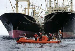 Greenpeace'den balina avcılarını durdurdu.18688