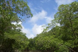 Amazon ormanları hızla yok ediliyor.25770