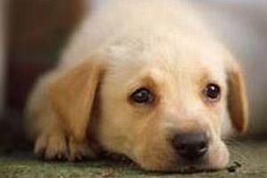 Konya'da sahipsiz köpekler toplanıyor.7749