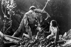 Şempanze Çita anılarını yayınlayacak.18324