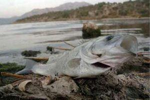 İstanbul'da balıklar kıyıya vurdu.13061
