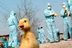 Almanya'da kuş gribi saptandı.13495