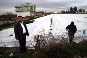 Çiftçi, ürününü soğuktan plastik tül ile koruyor.31893