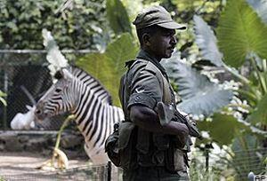 Sri Lanka'da 20 günde 550 ölü.18828