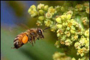 Milyonlarca arı otoyolunu işgal etti.12604