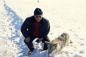 Bir kurt ayakta donarak ölmüş halde bulundu.14156