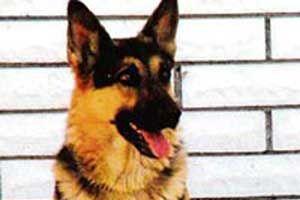 Köpek 911'i arayarak sahibini kurtardı.9595