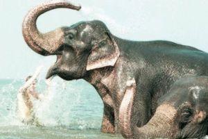 Fillerin avlanmasına izin çıktı.13472