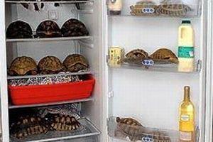 75 kaplumbağayı buzdolabında besliyor!.15431
