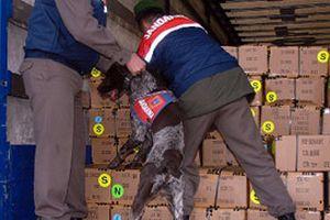 Tokat'ta uyuşturucu operasyonu: 13 gözaltı.15771