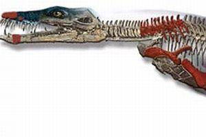 Deniz canavarı fosili en büyük deniz sürüngeni.9359