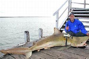Oltaya 250 kiloluk köpekbalığı takıldı.14496