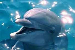 Balinaları yunus kurtardı.10056