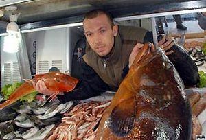 40 kiloluk dev Orfoz balığı.19459