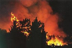 Göynük'te 85 hektarlık orman yandı.13383