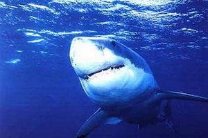 Köpek balığı saldırısından kurtuldular.13871