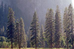 Türkiye'nin orman varlığı arttı.14820
