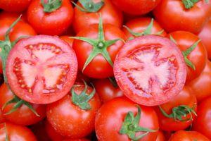 1 dönüm tarlada 80 ton domates.21864